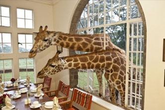 casa jirafas kenia