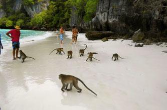 mokey bay islas phi phi