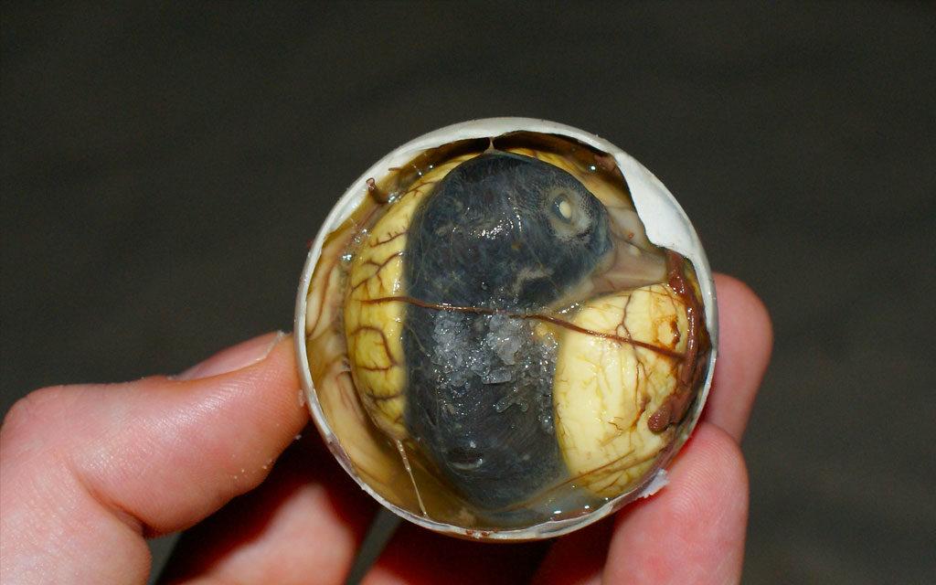 Huevo con feto