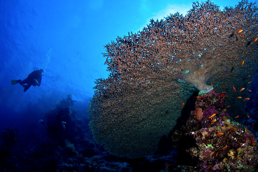 Buceo reserva Ras Mohammed