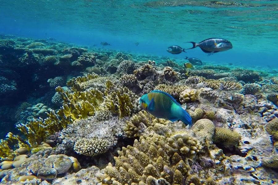 Snorkel Sharm el Sheikh